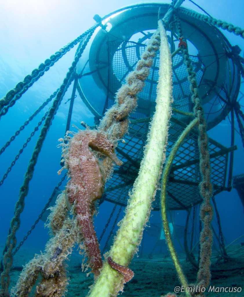Divenjoy - la nostra rubrica di biologia marina