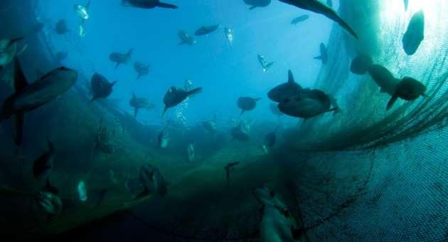 biologia marina - Proteggere il mare
